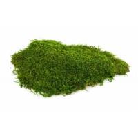 Стабилизированный плоский мох, 1м2