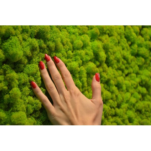 Стабилизированный мох ягель, 1уп