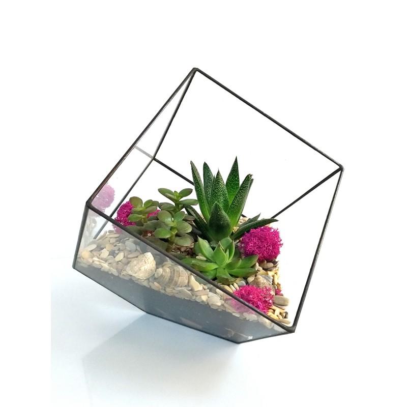 Флорариум микс из суккулентов, Куб 12,5*12,5см