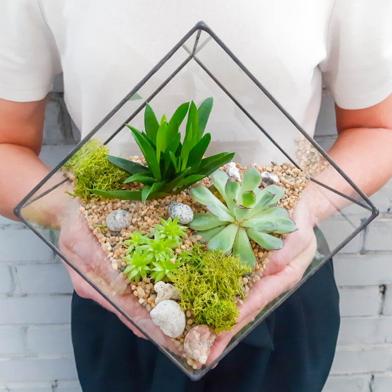 Флорариум, микс суккулентов, куб