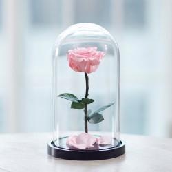 Роза в колбе, Розовая