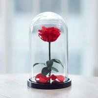 Сказочная неувядающая роза Красавица и Чудовище