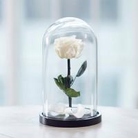 Роза в колбе, Белая