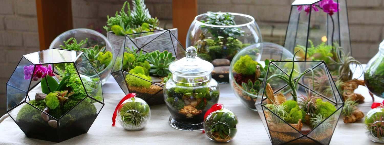 Флорариумы, террариумы, terrarium фото